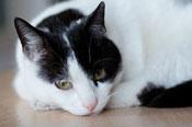 black and white sad cat