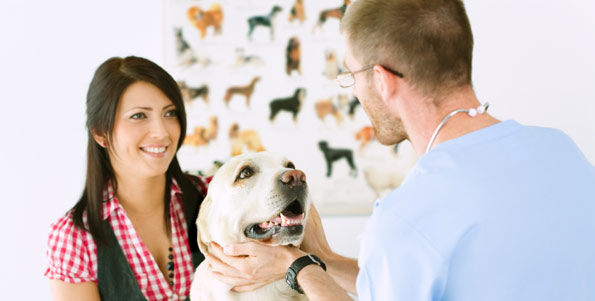 veterinarian and woman examining labrador retriever