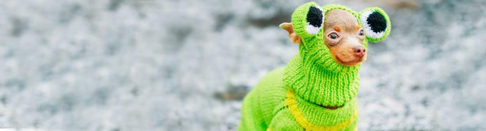 chihuahua in green lizard costume