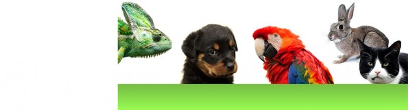 image with various species seen by vet clinic