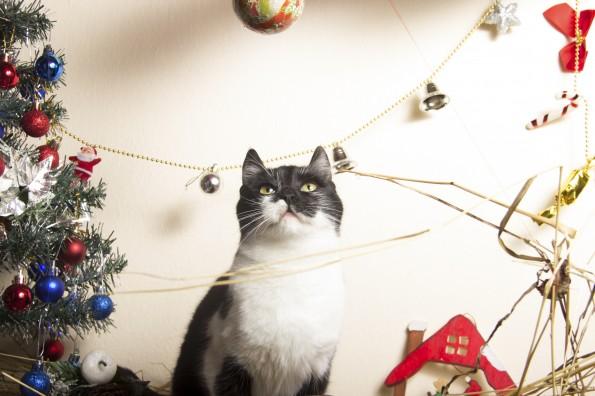 black and white cat christmas photo