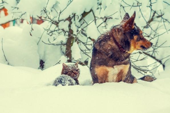 Cat and shepherd dog outdoor in the snowstorm