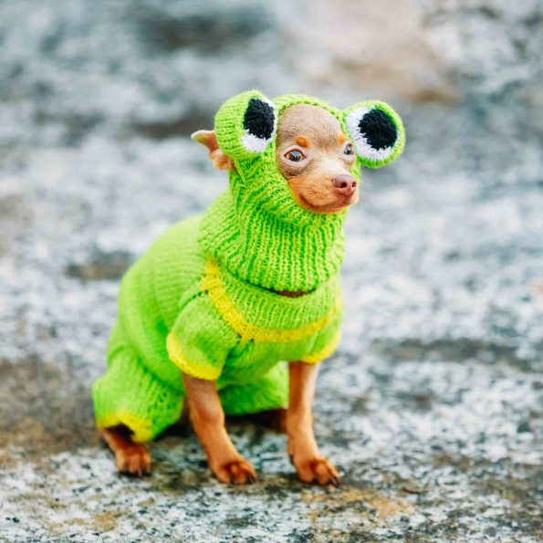 chihuahua in green frog costume