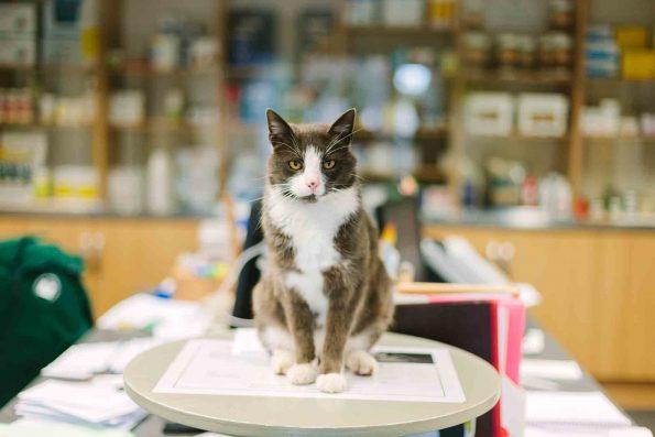 senior cat in office