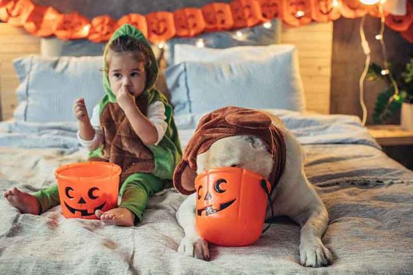child and bulldog in halloween costumes with candy bowls